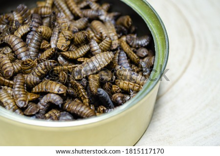 Food for reptiles and animals. Preserved larvae of Hermetia illucens, black soldier fly. Royalty-Free Stock Photo #1815117170
