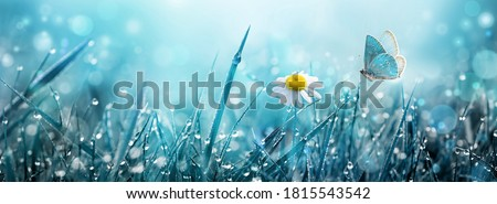 Wild chamomile flower and flying butterfly over morning grass with dew in the meadow. Royalty-Free Stock Photo #1815543542