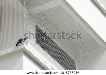 Close-up pigeon resting on the balcony With a net to prevent birds from living in the balcony of the building , Ideal for use in the design fairly Royalty-Free Stock Photo #1815735959