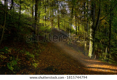 Forest trail sunbeams in morning. Forest sunbeams trail view. Sunbeams forest trail #1815744794