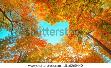 Autumn forest background. Vibrant color tree, red orange foliage in fall park. Nature change Yellow leaves in october season Sun up in blue heart shape sky Sunny day weather, bright light banner frame #1816260440