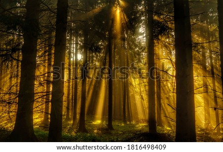 Forest sunbeams through trees view. Sunbeams forest. Sunbeams in forest. Deep forest sunbeams #1816498409
