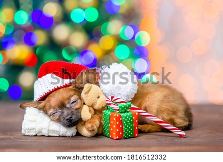 Cute puppy wearing a red santa`s hat hugs toy bear and sleeps on pillow under blanket with gift box and candy cane on festive Christmas background. Empty space for text. #1816512332