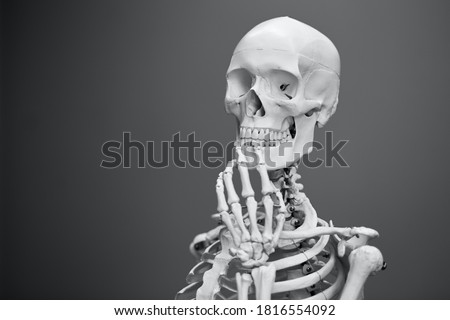 Panorama picture of upper part of Human Skeleton Model with Black Background. Human Skeleton Model Thinking.Vector illustration.