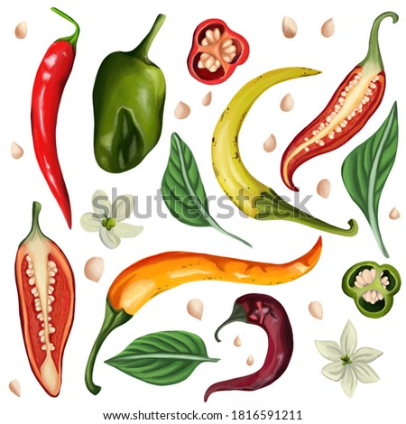 Set of hot chili peppers on an isolated white background. Peppers, leaves, flowers and seeds. Different angles, cut pepper. Digital art, oil imitation. Raster illustration