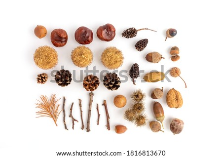 a set for children's crafts made from natural materials, acorns, chestnuts, cones and other forest materials, autumn flat lay Royalty-Free Stock Photo #1816813670