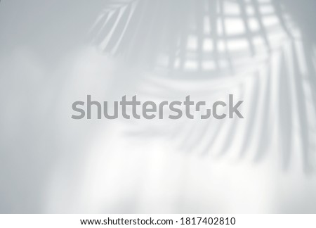 Realistic and organic tropical leaves natural shadow overlay effect on white texture background, for overlay on product presentation, backdrop and mockup Royalty-Free Stock Photo #1817402810