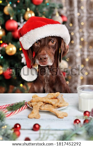 Vertical picture of Santa dog at the Christmas dinner