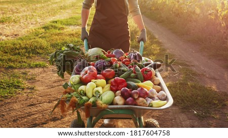 A farmer transports a crop of different vegetables in a wheelbarrow at sunset on a dirt road along a field Royalty-Free Stock Photo #1817604758