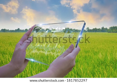 Business woman using smart tablet,rice fields production control,concept agricultural product control technology,to agriculture future trading world market,track productivity,satellite for Agriculture Royalty-Free Stock Photo #1817852297