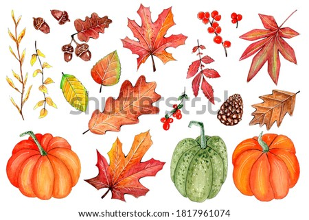 Hand Drawn watercolor Thanksgiving set, pumpkins and autumn fall elements.