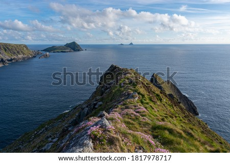 View from a cliff in Ireland with pink flowers in the foreground. View on the Skellig Islands. View from a cliff at the Ring of Kerry. Kerry cliffs in Portmagee. Royalty-Free Stock Photo #1817978717