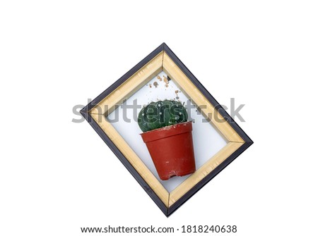 Cactus isolated in wooden picture flame on white background