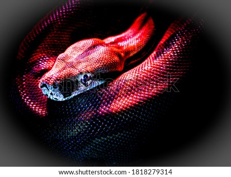 Background Picture of dangerous red snak.