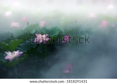 Early in the summer, the lotus in the lotus pool is blooming in the fog, just like a Chinese ink painting.