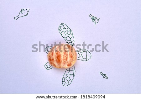 Peeled mandaring half as a turtle's shell. Top view drawn picture of turtle and real ripe mandarin's part isolated on white. #1818409094
