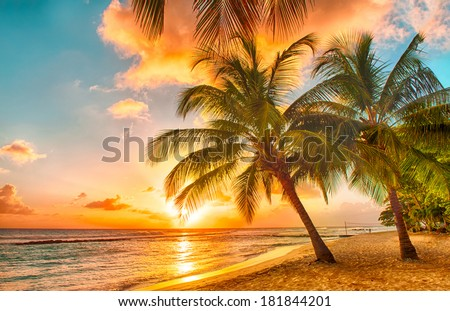 Beautiful sunset over the sea with a view at palms on the white beach on a Caribbean island of Barbados Royalty-Free Stock Photo #181844201