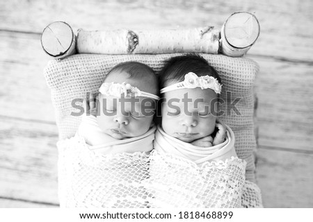Newborn twins wrapped in a wrap sleeping in the birch bed. Sibling love from birth - sisters lie together. Black and white picture.