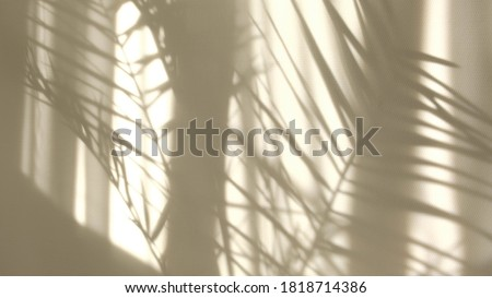 Morning sun lighting the room, shadow background overlays. Transparent shadow of tropical leaves. Abstract gray shadow background of natural leaves tree branch falling on white wall Royalty-Free Stock Photo #1818714386