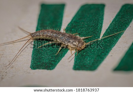 Silverfish in a cardboard box at Hughes, ACT on a spring afternoon in September 2020