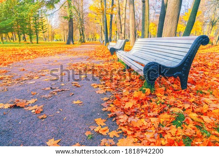 Morning landscape in autumn park. Orange red maple leaves on road. Yellow forest tree on background. Fall season nature scene beauty. Bench alley in city garden. Path in woods, scenery in sun street Royalty-Free Stock Photo #1818942200