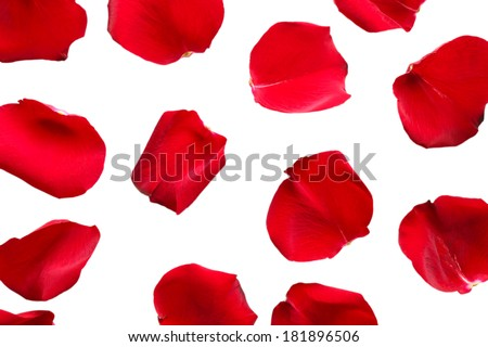 Beautiful red rose petals, isolated on white #181896506
