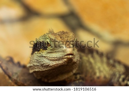 Macro picture of the reptile