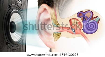 Sound speaker and structure of the human ear. Influence of loud sound on hearing. Royalty-Free Stock Photo #1819130975