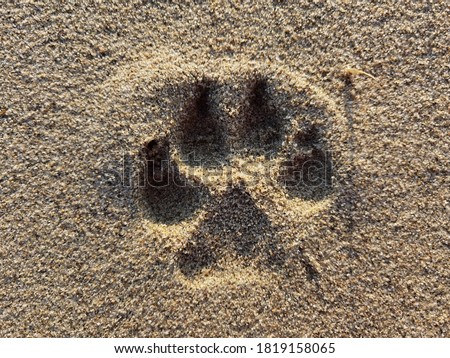 Dog paw print in beach sand  Royalty-Free Stock Photo #1819158065