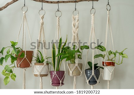 Six handmade cotton macrame plant hangers are hanging from a wood branch. The macrame have pots and plants inside them. Royalty-Free Stock Photo #1819200722
