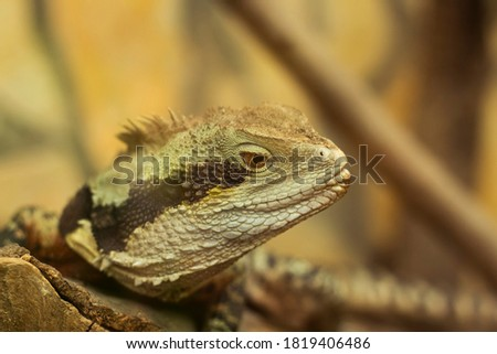 Macro pictures of the reptile