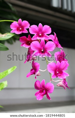A picture of purple orchid hanging​ from​ a​ chandelier, beautiful