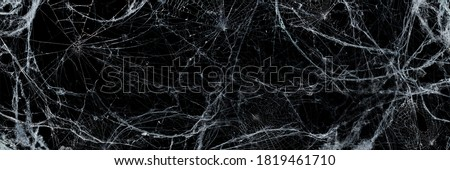 Halloween Background - Spooky Cobweb In The Darkness #1819461710