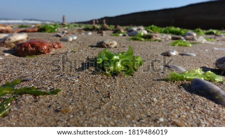 Low angle close up shot of sea pebbles and stones on the beach during summer vacation. Shallow depth of field with main focus on the stones. Horizontal picture of seaweeds, algae and clam shells.