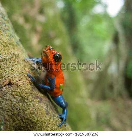 Small posion dart frog  looking like spiderman