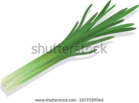 Illustration of fresh vegetables (Chinese chive) #1819589066
