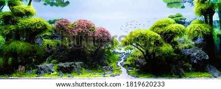 Close up image of underwater landscape nature forest style aquarium tank with a variety of aquatic plants inside. Royalty-Free Stock Photo #1819620233