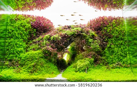 Close up image of underwater landscape nature forest style aquarium tank with a variety of aquatic plants inside. Royalty-Free Stock Photo #1819620236