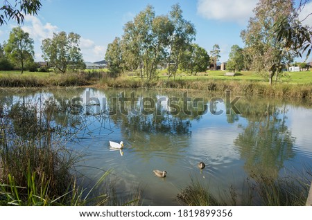 A wetland with some wild ducks swimming on water pond with some Australian homes/houses in the distance. Concept of environmental protection, conserving nature reserve in residential areas.