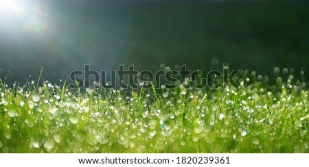 Green border of grass. Many dew drops glow and sparkle in sun in morning fresh wet grass in nature. Beautiful bokeh circles. Royalty-Free Stock Photo #1820239361