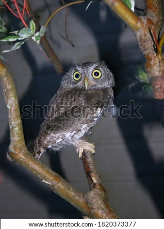 picture of an owl in evening
