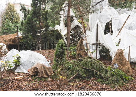 plants sheltered from the cold, different plants are covered with a rag covering material from the cold Royalty-Free Stock Photo #1820456870
