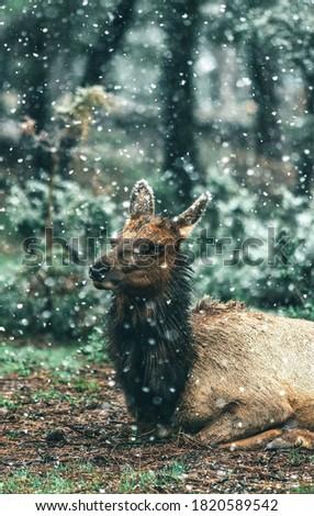 Beautiful picture of llama in snowfall