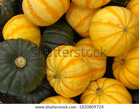 Green and yellow Kabocha Squashes. Kabocha Squash is a type of winter squash, a Japanese variety of the species Cucurbita maxima. It is also called Japanese pumpkin.  #1820809724