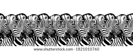 Striped zebras seamless pattern white background isolated, zebra head art border, animalistic black & white banner design, african animal wallpaper, wild nature frame, repeating ornament, trendy print Royalty-Free Stock Photo #1821010760