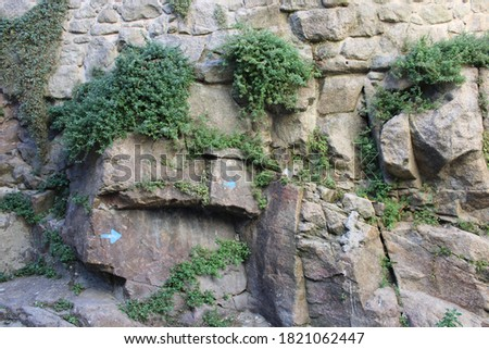 Rocky boulder with green vegetation plants growing from cracks. Close up background wallpaper of natural texture for graphic and web design purposes.  #1821062447