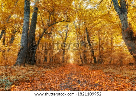 Dense forest in the middle of autumn
