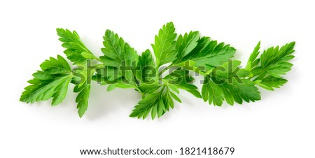 Parsley isolated. Parsley background. Parsley leaf on white. Parsley leaves top view. Full depth of field. #1821418679