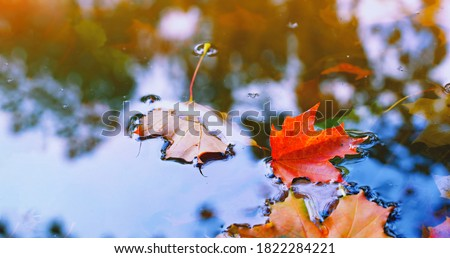 Autumn cold rainy day. Yellow orange maple leaf floating in lake. Vibrant color of fall season of nature. Calm forest park. Reflection of blue sky in clean water surface of pond. Tranquil zen concept. Royalty-Free Stock Photo #1822284221
