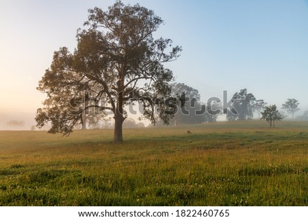 Early morning country landscape with paddocks and trees at Gresford, Hunter Region, NSW, Australia. Royalty-Free Stock Photo #1822460765